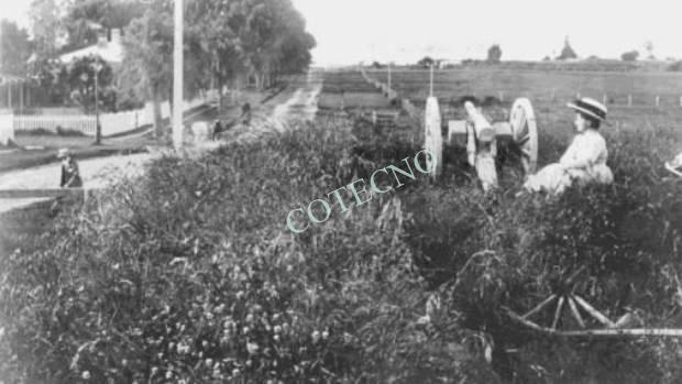 Se descubre fosa común en Tauranga por evaluación de terreno